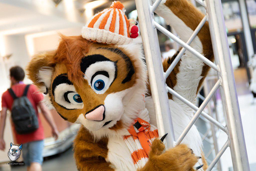 Climbing tiger at the #eurofurence25 .^^ Have a nice #FursuitFriday        Photo made by @FuwoWolf Suit made by @b3mascots<br>http://pic.twitter.com/124xLpnjpK