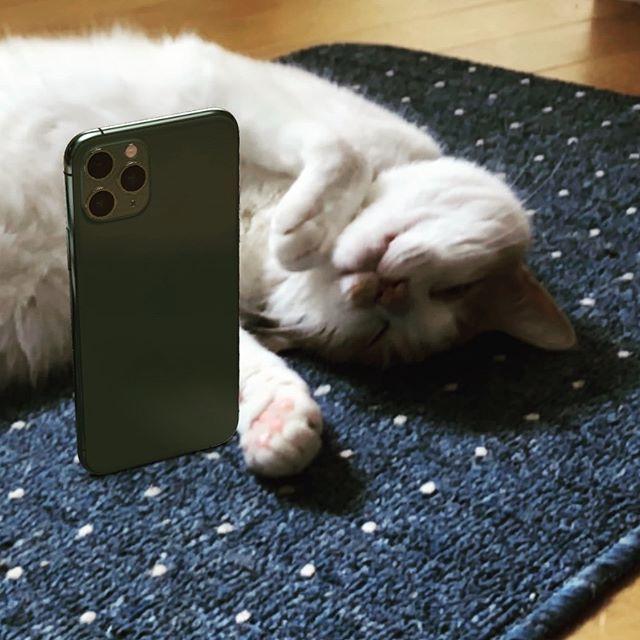 IPhone 11 Photo