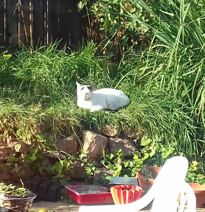 Chance to sit in the garden ruined by kick-boxing neighbour once again. Etta's vibe is sour.