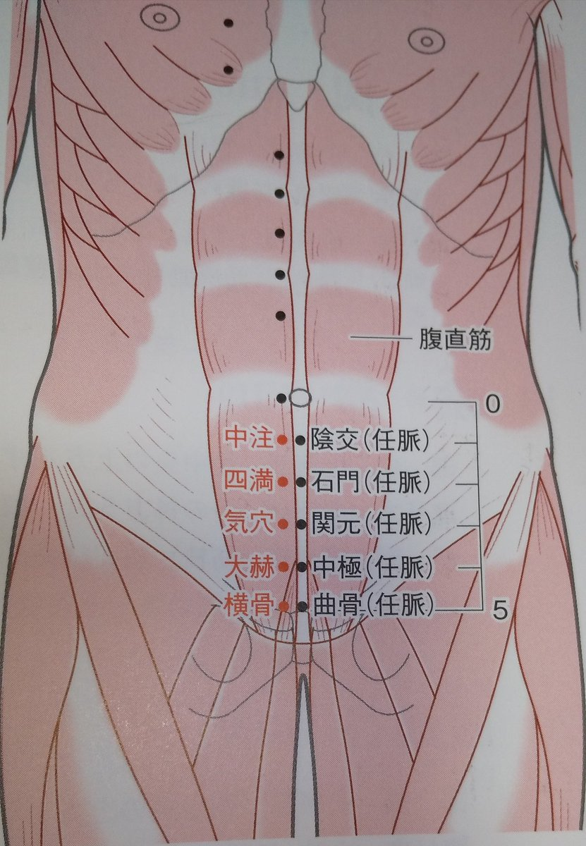 🔸気穴:腎経  ・下腹部、臍中央の下方3寸、前正中線の外方5分、  ・腹直筋>肋間神経  ・感覚神経>腸骨下腹神経  ・血管>浅腹壁動脈/下腹壁動脈  ・主治>下痢、痢疾、腸仙痛、小便不通、五淋(泌尿器疾患)、陽萎、月経不順、白帯、不妊、腰脊痛、奔豚、目の充血/腫れ/痛み