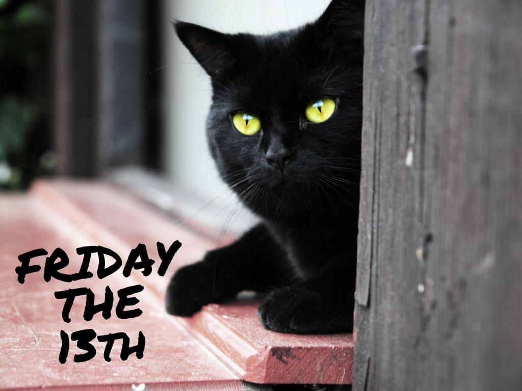 Открытки, картинки черная пятница с котом