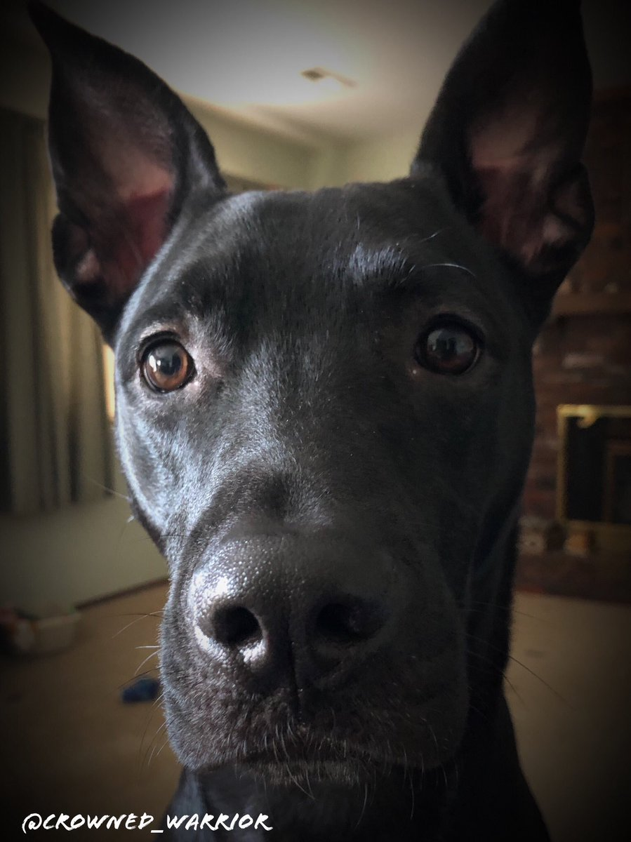 I was once an aggressive/unwanted dog🤦♂️ I am a rescue I had to fight for my food and toys After a year+ in foster care, I was lucky to be given another chance. All I needed was time, attention, patience, and LOVE Now... I'm a good boy🐾👅 #NationalRescueDogDay #AdoptDontShop