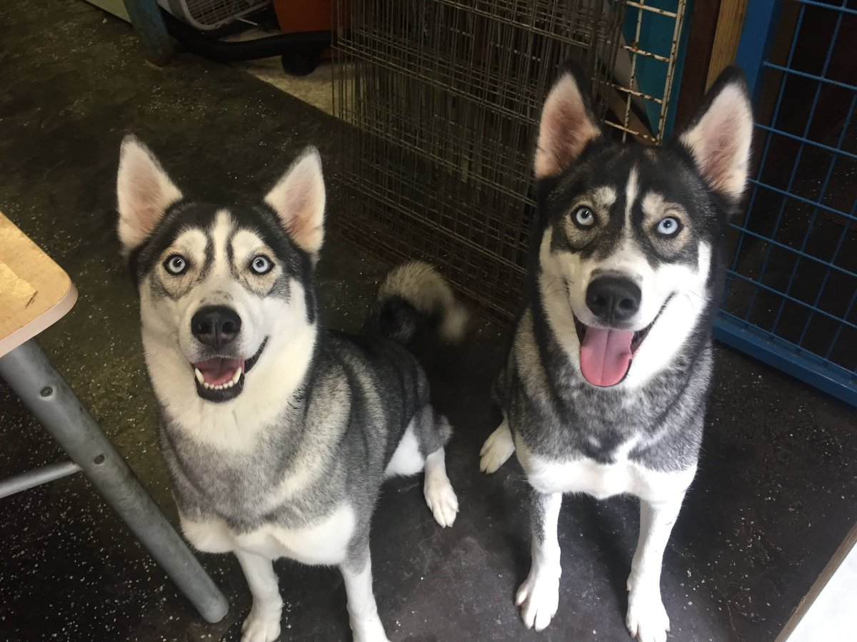 Arya and Lyka are such pretty girls!