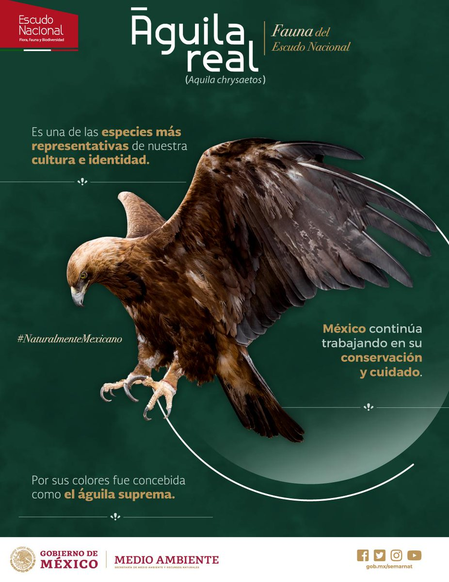 La patria se refleja en el vuelo del #ÁguilaReal, símbolo vivo de #México y corazón de nuestra bandera nacional. 🇲🇽🦅🐍🌵¡#VivaMéxico!#NaturalmenteMexicano