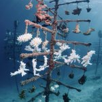Image for the Tweet beginning: 55% of #coral mortalities in