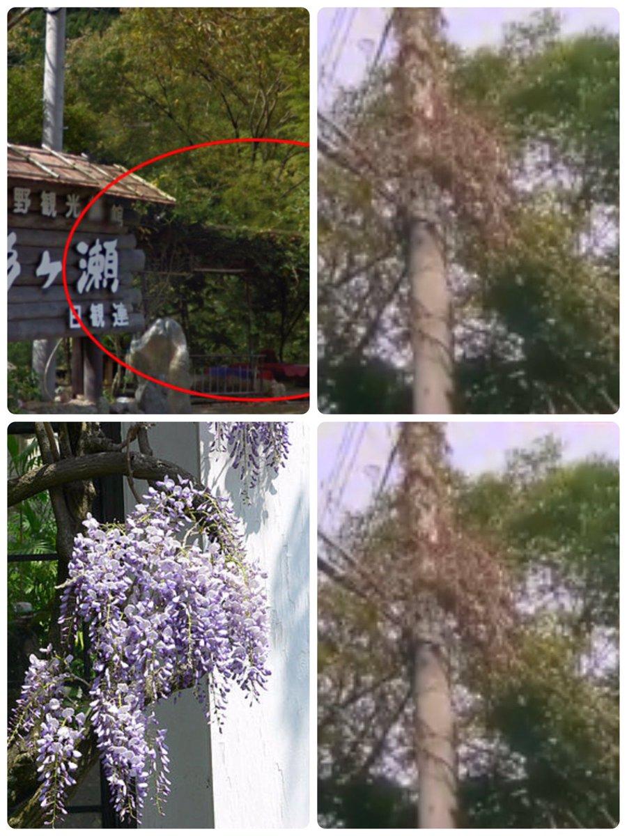 藤の木 関西 電力