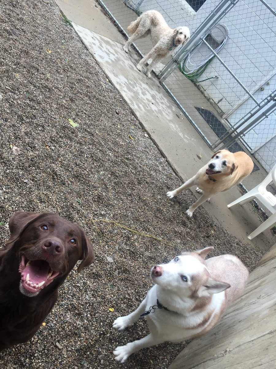 Ruthie, Molly, Red, and Remington love playing together!!