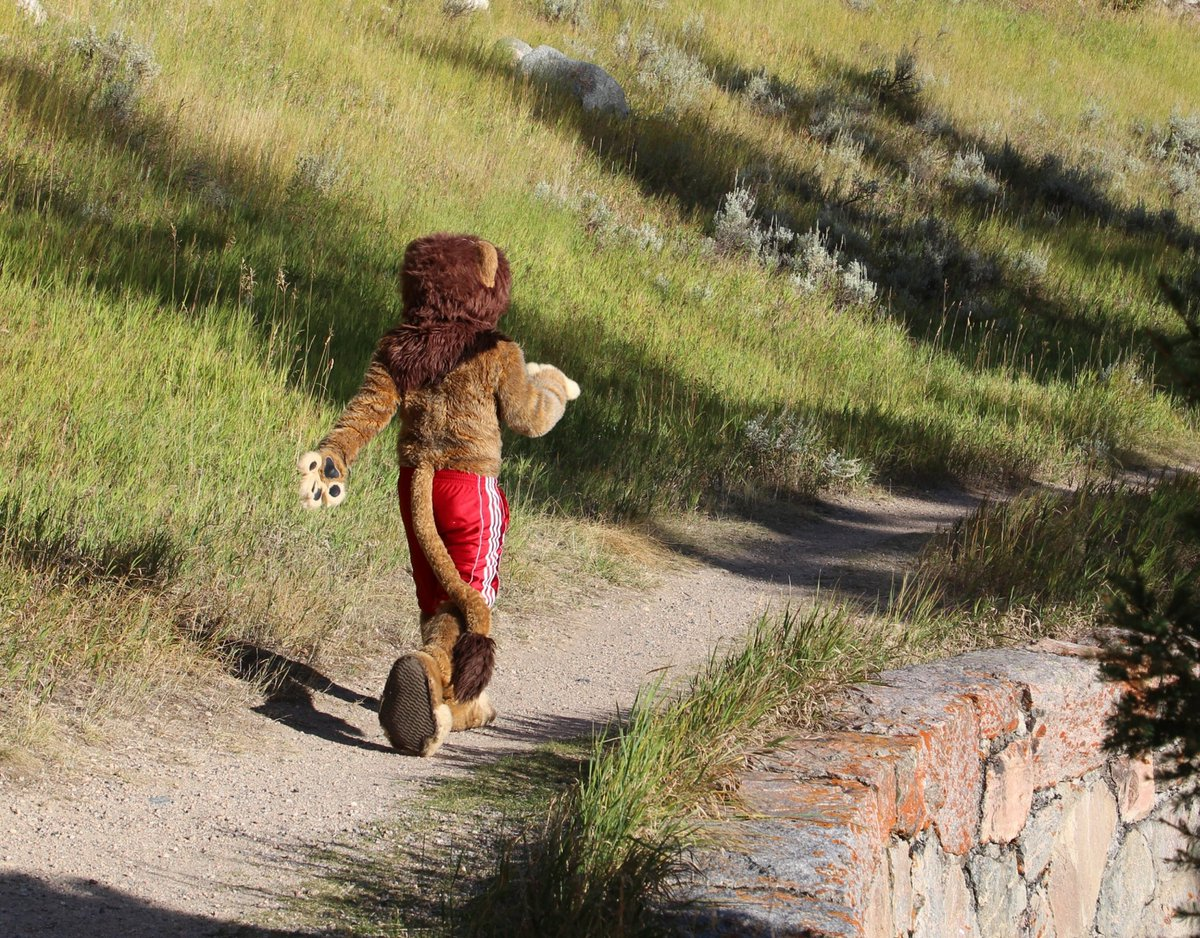 Up and back!  #FursuitFriday #DailyDHC #donthugcacti    @robypanther<br>http://pic.twitter.com/ekZ6EpNu6y