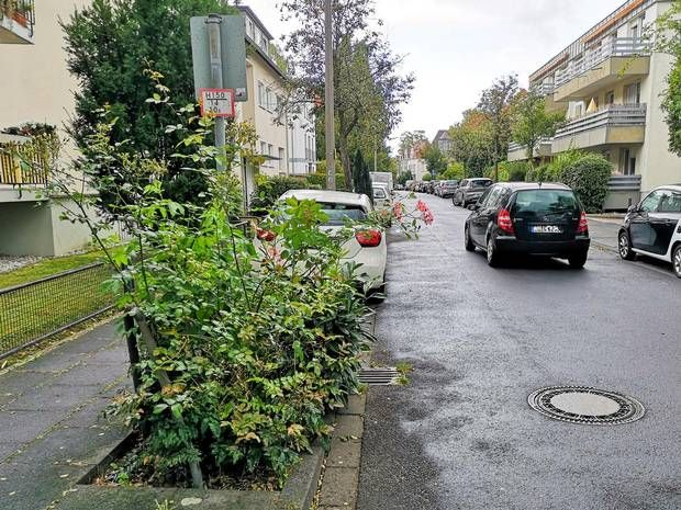 RT @ICLEI Up to 165 new trees are to be planted in Bad Godesberg @BonnGlobal by the end of March 2020. The city is increasingly focusing on varieties that can survive hot summers with little rain https://t.co/PEFF6avaH8 via @GA_english #CitiesWithNature