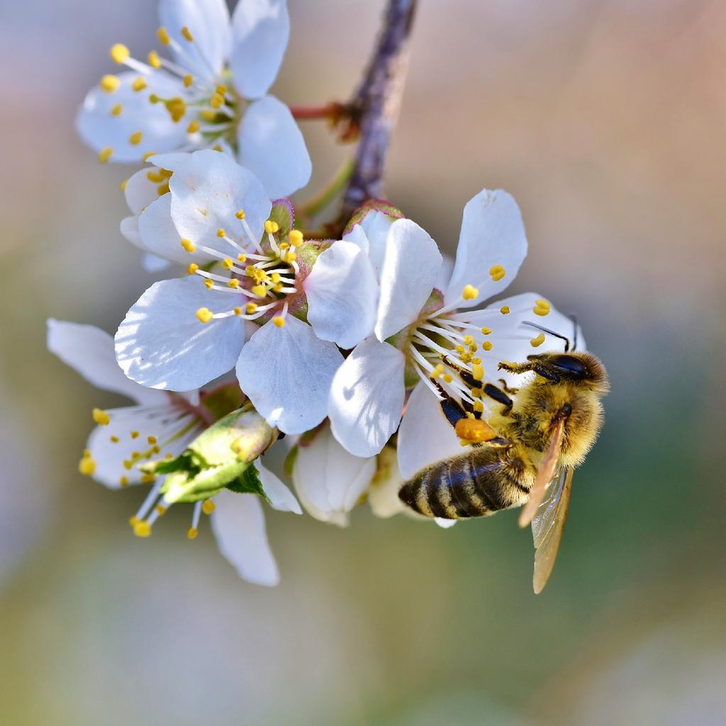 BEE-TASTIC FACT OF THE DAY! 🐝🐝🐝 It would take about 1 ounce of honey to fuel a honey bees flight around the world. #photooftheday #themoreyouknow #beesinthed #downtowndetroit #savethebees #urbanbeekeeping #worldbeeday #education #conservation #detroit #bees #bee #beehives