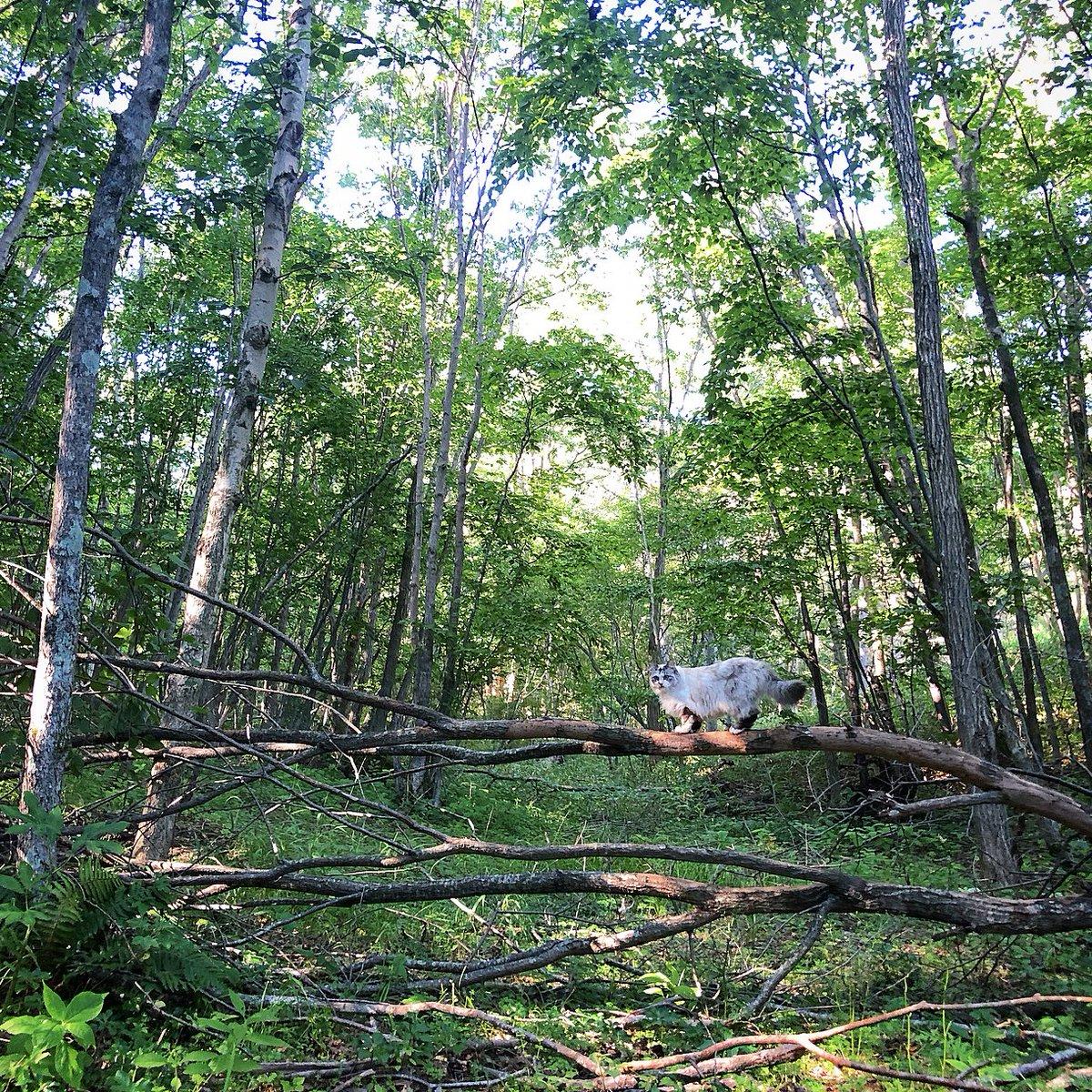 秋の気配をそこかしこに感じる季節になったけれど、森の中はまだ緑があざやか。