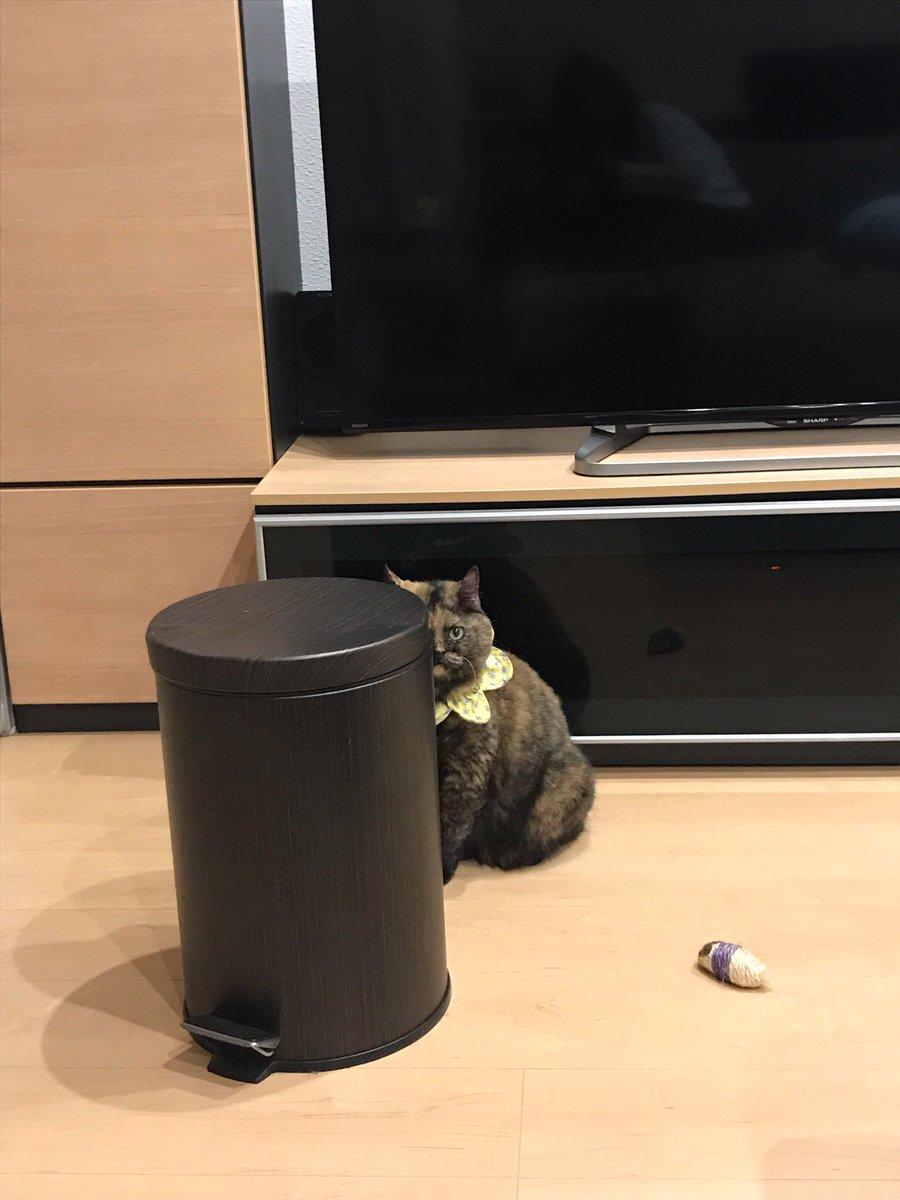 食べかけのヨーグルトを盗み食いされたので叱ったら、ゴミ箱を盾にし始めた。