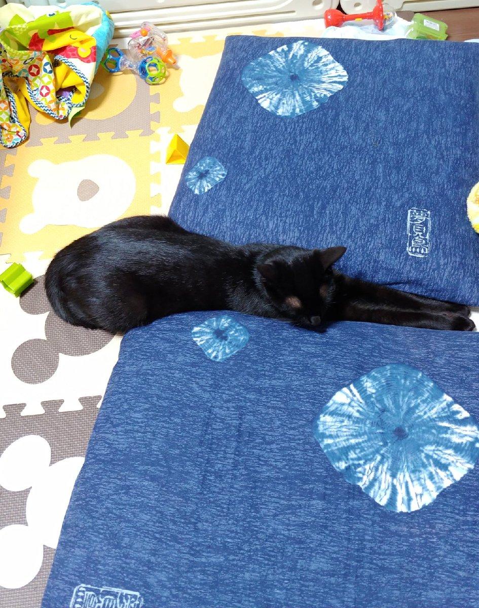 521日目。黒猫的トレンドなのか、「並んだ座布団の、ちょっと空いた隙間に挟まる」が本日ちょくちょく認められた。狭い隙間に身を寄せるなら座布団の上に乗って寛げばいいのに、と思うが何か違うらしい。日中や電気ついてる時は構わないが、夜間は踏まれるで。それ。