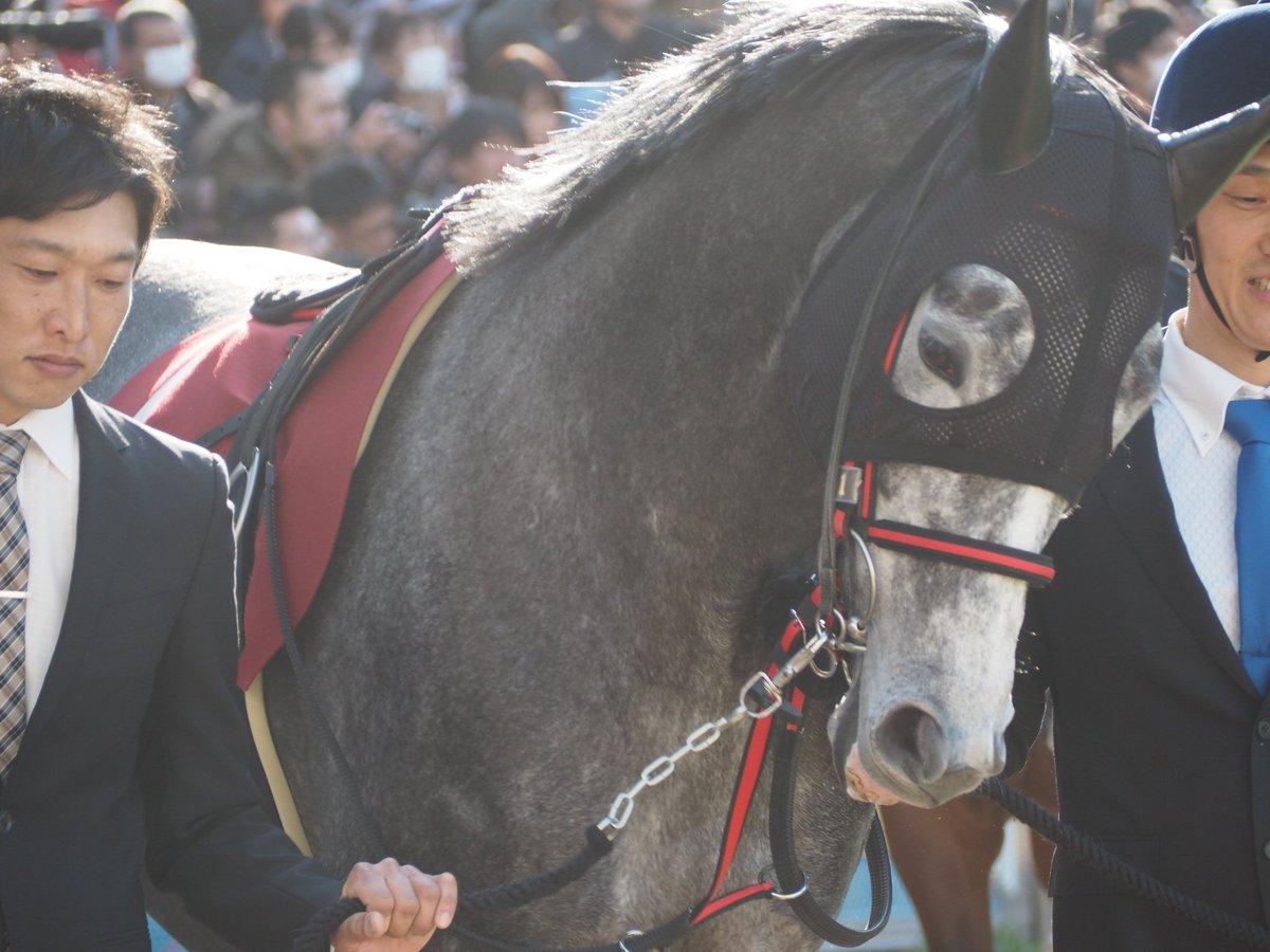 レイデオロは確かに強いけどもウインブライトは中山金杯、中山記念、そして香港でついにG1タイトルさえも手中にした今もっとも勢いのある馬。中山はほぼ庭だしそういうアドバンテージは強力だね。 #ウインブライト #松岡正海 #産經賞オールカマー #中山競馬場