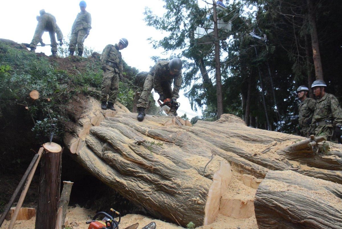 第1空挺団及び東北方面施設支援群(東北方)は、千葉県内において関係機関と連携し、引き続き復旧活動を行っています。これは、長年集落を火災から護ってきた「槇(まき)」の木とのことでした。@NeaAdminpr #精鋭無比 #第1空挺団 #千葉県