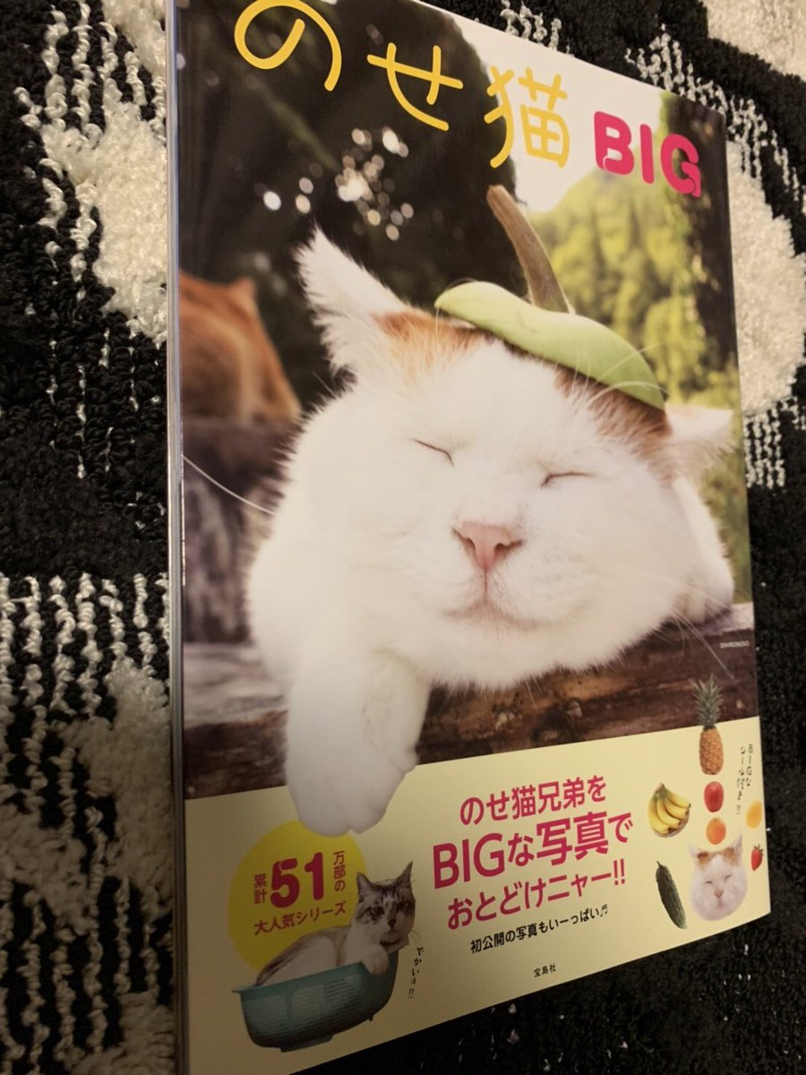 あ、現場でこんな誕生日プレゼントをいただきました。「癒されてください」とのことで堪能中!!(笑)去年くらいからなんか猫に縁があるような気がする〜。(ゆうま)#内田雄馬