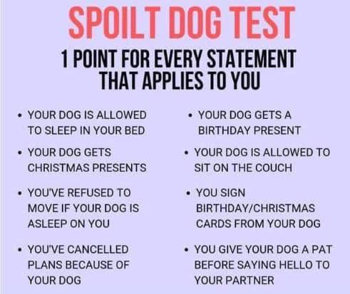8/8 oops #spoiltdog #jackrussell #parttime #workingdog <br>http://pic.twitter.com/gKaKHPKwjj