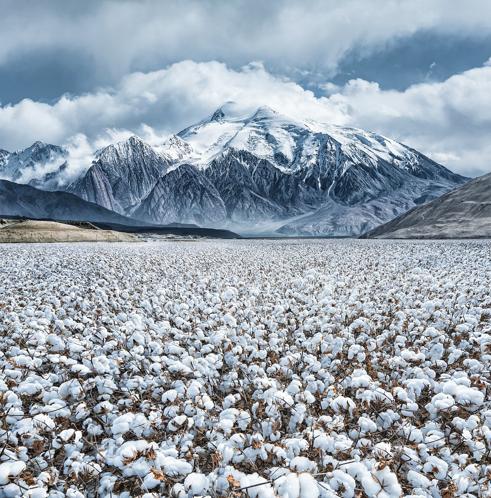 """China's Flora Tour: The """"white gold"""" on the ancient Silk Road #FloraofChina #BeijingExpo #HorticulturalExpo https://bit.ly/2kzGleR"""