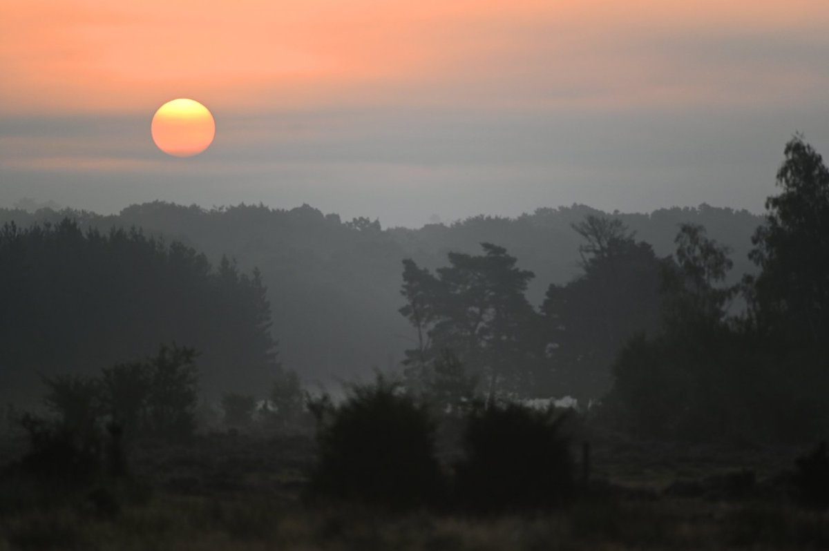 """Season of mists and mellow fruitfulness ..."" Dawn on the #NewForest. Have a great #weekend, folks. #SaturdayMotivation #weekendvibes #sunrise<br>http://pic.twitter.com/d2JoSZWqRT"