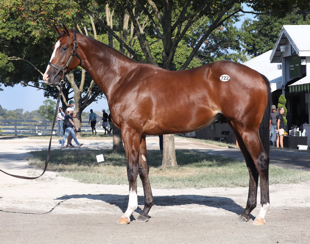 test Twitter Media - Book 2 Day 1 was a strong one for our team. We came away with 7 purchases led by this beast Hip #722 Into Mischief colt from @selectsalesagt headed to @bradcoxracing excited to do some damage and add some nice horses to our roster. Thanks to all our clients for their support! https://t.co/gaoc9awT4A