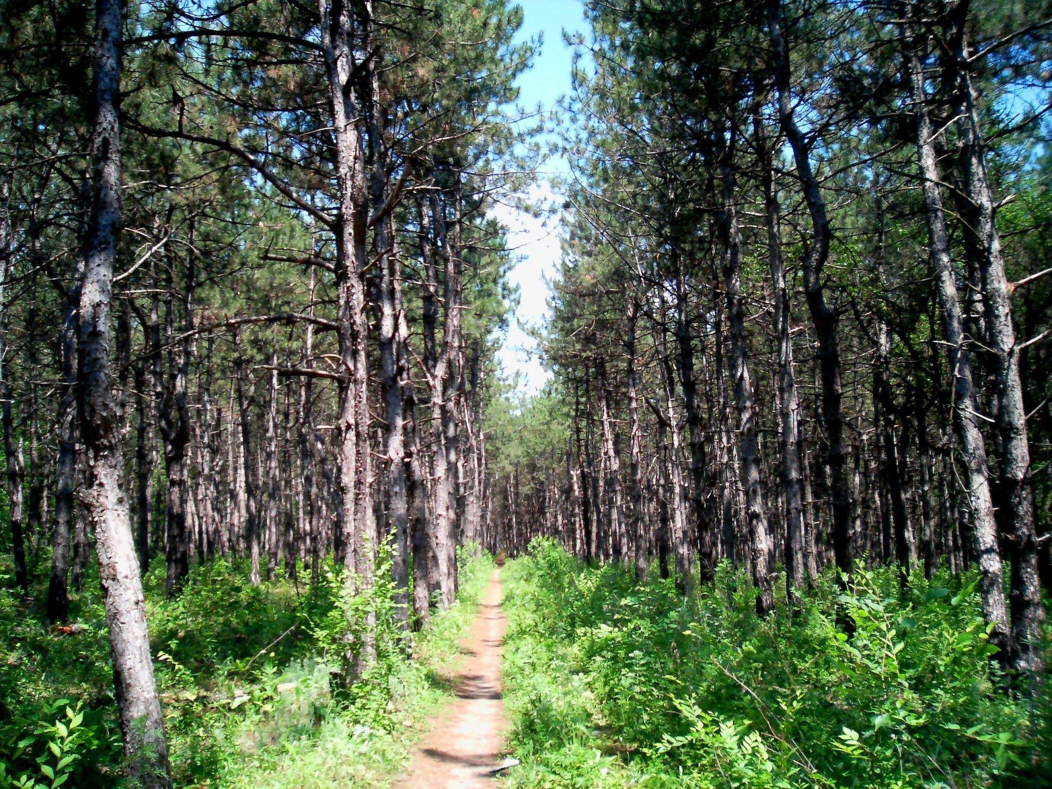 отрывок жизни фото алексеевский лес ростовская подобрать настольную лампу