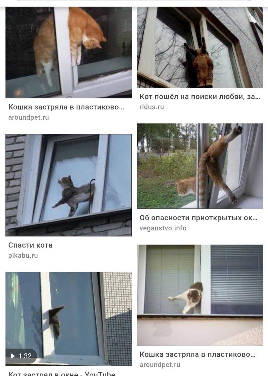 Умные котята картинки может