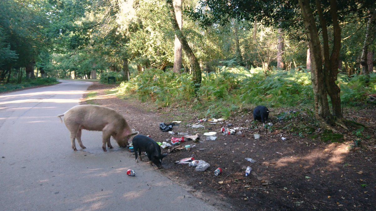 I do not understand the TOTAL SCUMBAG mentality that does this?!   If you've taken the time to visit and enjoy the #NewForest: USE THE BINS!!!  Or... take your junk/rubbish home with you!!!  #litter #plastic #environment  *Note: Many thanks to the man that stopped to help! <br>http://pic.twitter.com/f1hVSRayk6