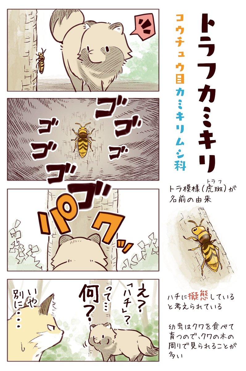 わいるどらいふっ!第151~153種【さわるなキケン!】昆虫に化かされるタヌキとキツネ