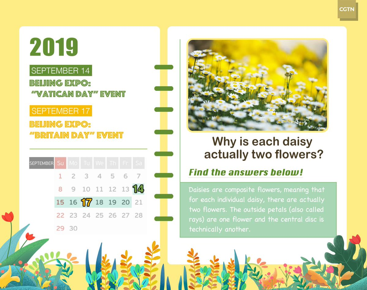 #BeijingExpo: Why is each daisy actually two flowers?Find the answer in this week's Plants Calendar for #HorticulturalExpo!