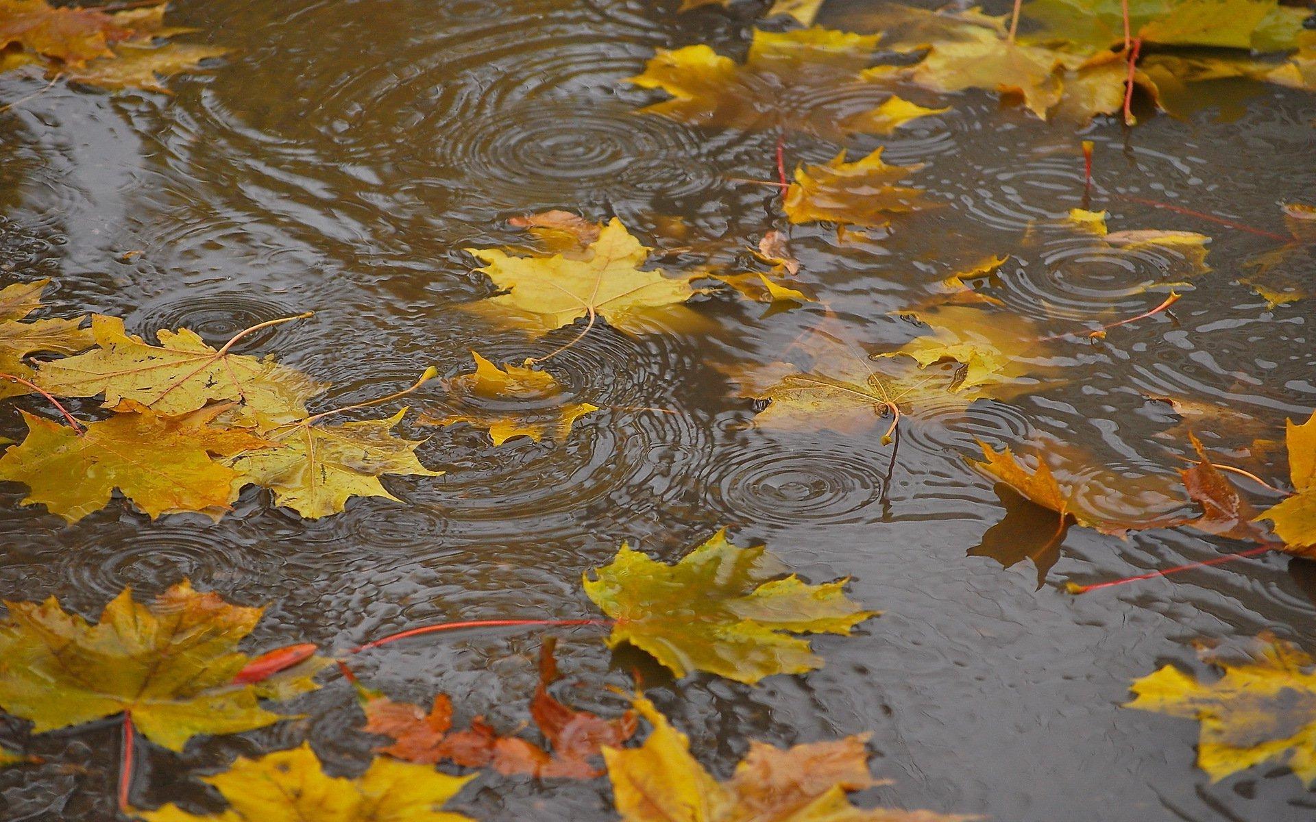 Открытки дождливой осени