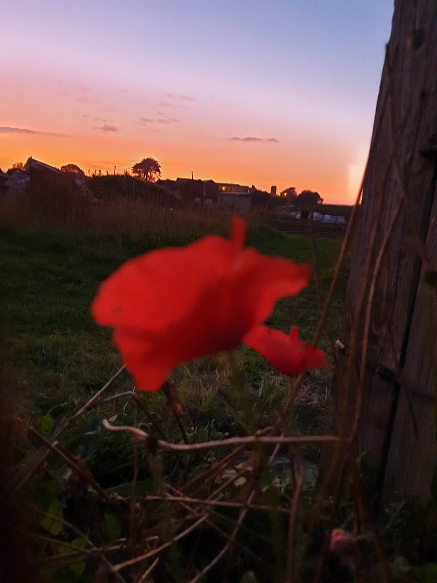 Poppy sunset  #saturdaynight #RibbonofPoppies #Poppies #Remembrance #poppy #LivingMemorial #LestWeForget <br>http://pic.twitter.com/dDMVA3nvFM