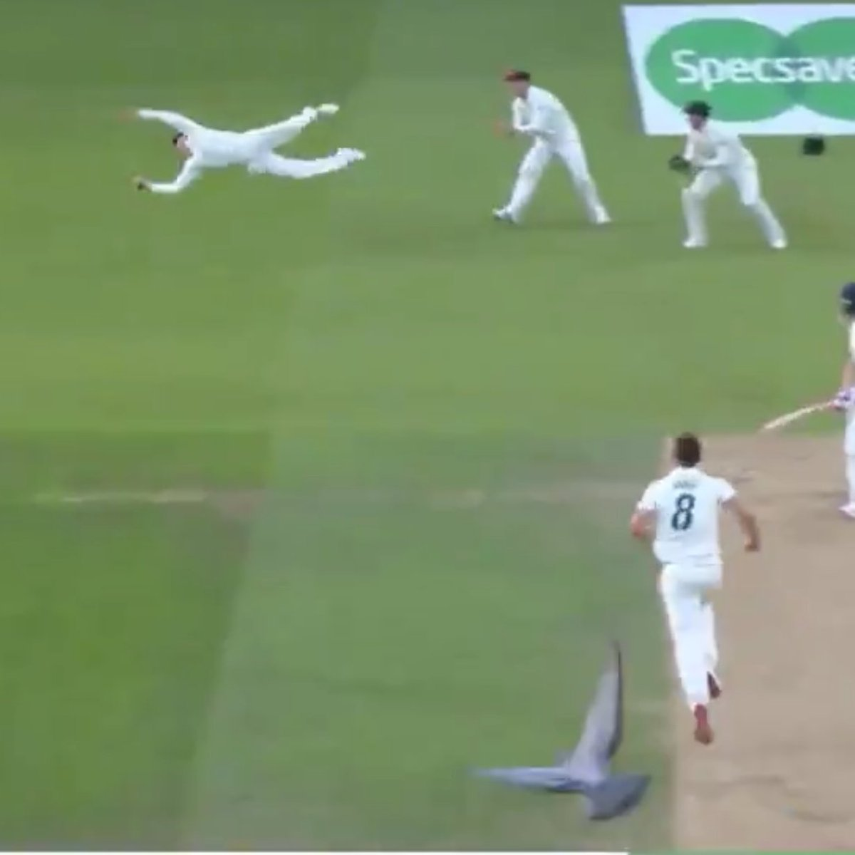 Show me a better picture, I'll wait!!! #Ashes #ENGvAUS #SteveSmith <br>http://pic.twitter.com/JwrMCKr5oR