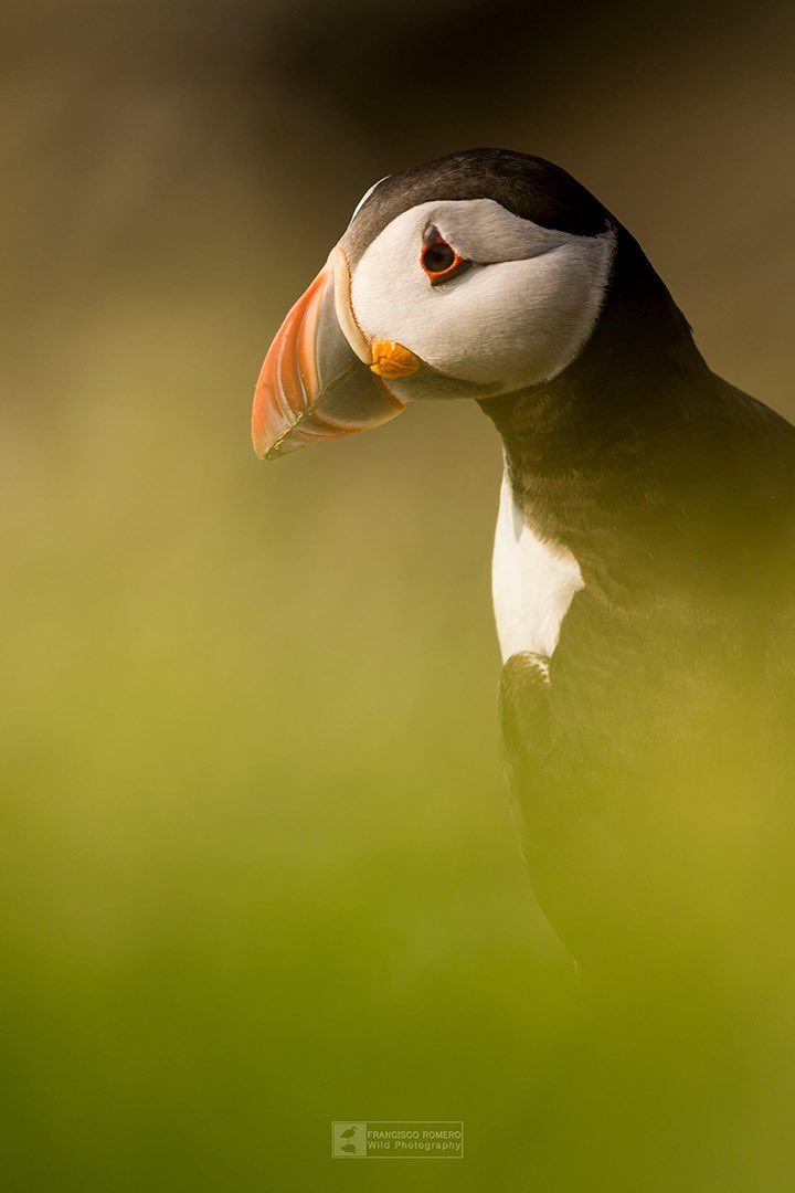 """I R L A N D A // """"The moments""""   @SigmaPhotoSpain / #sigma500sport / #birds<br>http://pic.twitter.com/MyMJDTObIS"""