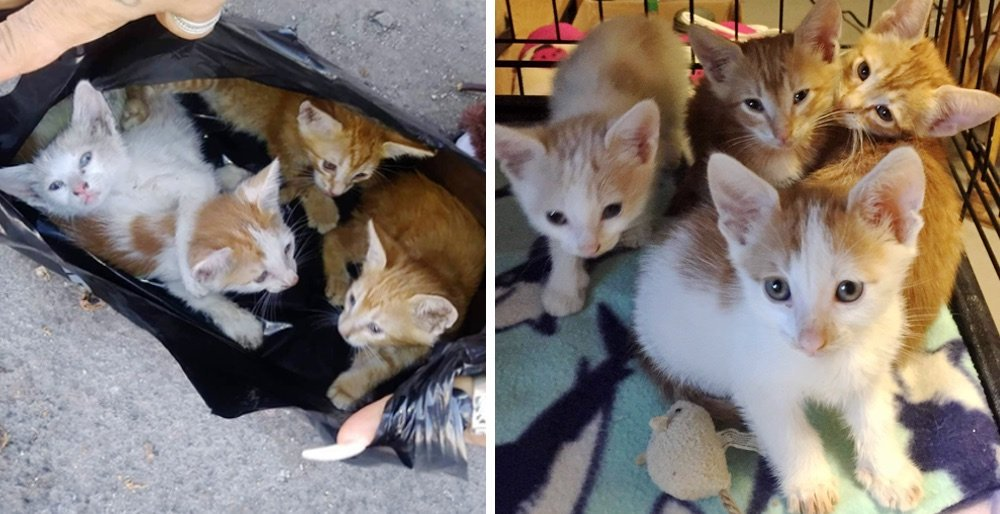 Rescuers found kittens in a garbage bag and went back for their cat mom. See full story and updates: lovemeow.com/rescuers-kitte…