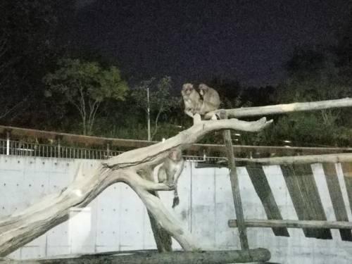猿 仲良さそうな二匹とポツンとしてる一匹