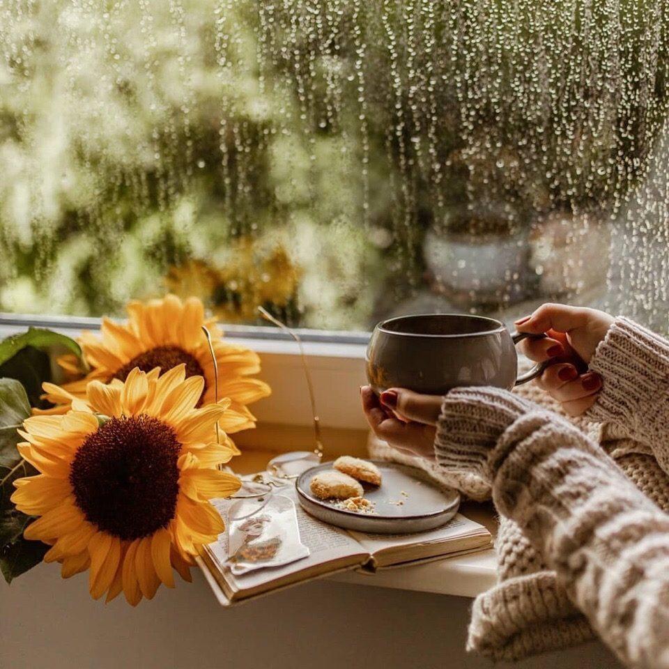 картинки фото с добрым утром с дождливая осень своих
