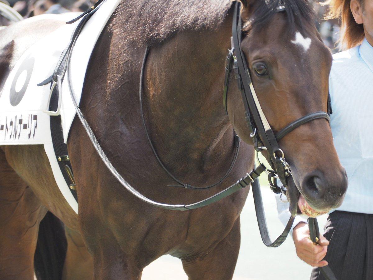 来週の日曜日の阪神は菊花賞へ向けてのトライアル神戸新聞杯。皐月賞馬サートゥルナーリア対クラシック善戦中のヴェロックスの一騎討ちムード。菊への切符3枚をかけた戦い! #サートゥルナーリア #ヴェロックス #レッドジェニアル #神戸新聞杯