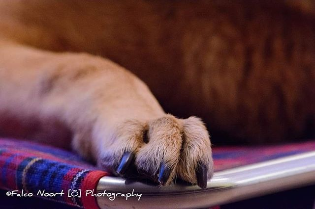 @lucybenoso ===========================#falconoort #nikon #sigmalenses #sigma #nikonnetherlands #nikonD5200 #D5200 #Lucy #dog #dogs #pet #pets #dogstagram #lovedogs #instadogs #dogslife #dogsofig #ilovemydog #doglover #dogsofinsta #dogsofinstagram #shep… https://ift.tt/32HaAAH