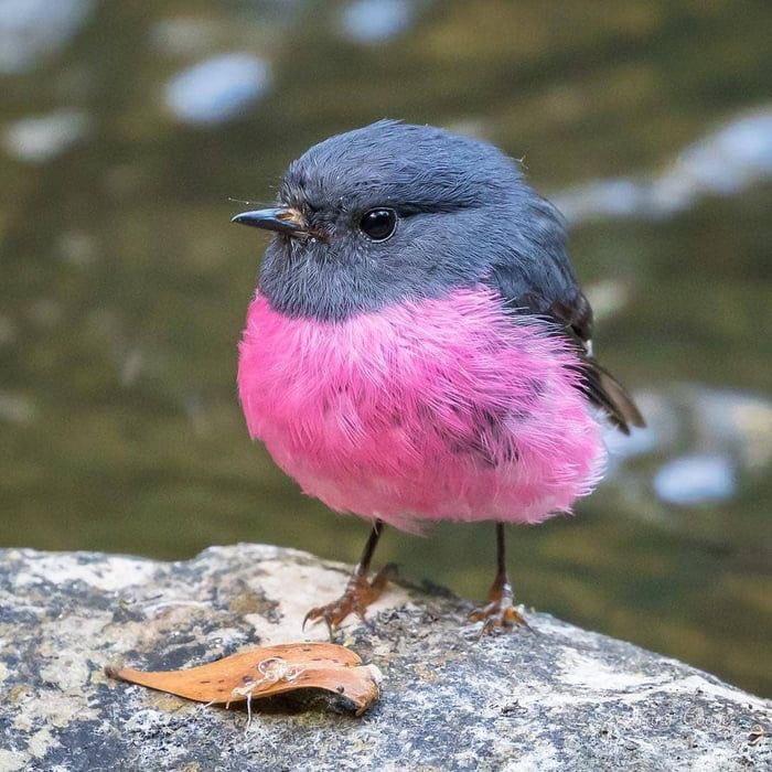 世界にはこんなにかわいい配色の鳥がいる