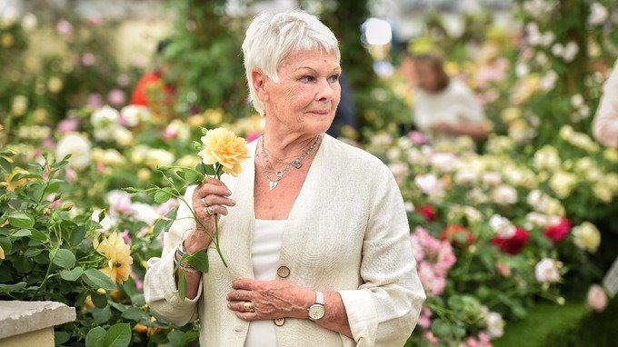 Day 1430 Chelsea Flower Show, 2017 Photo credit: PA Images #JudiDench #ChelseaFlowerShow<br>http://pic.twitter.com/mkpnor8GzS
