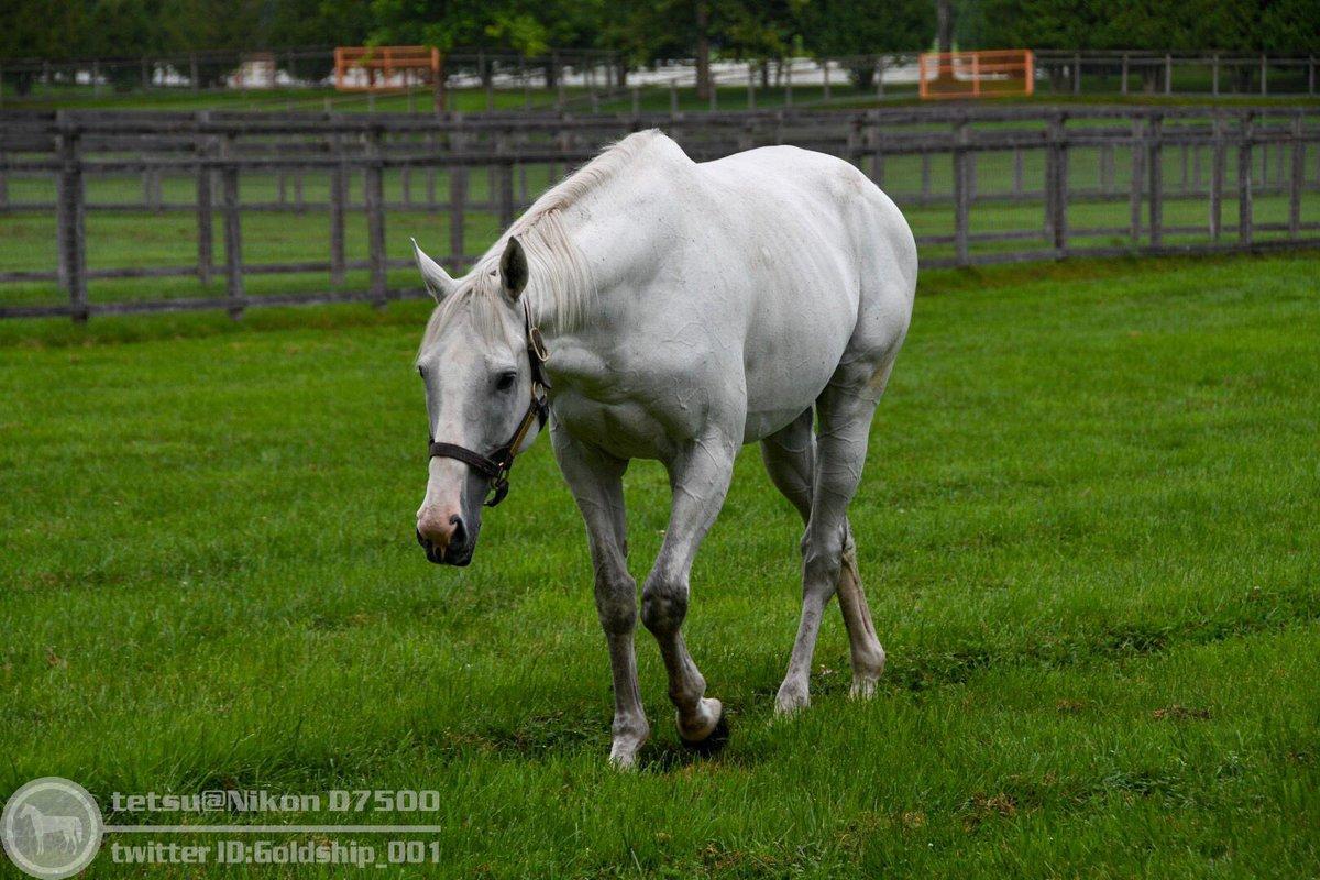 馬体診断用シップ画像( ^ω^ ) 今浪さん向けです。4枚目が気になります。 撮影:2019年9月15日  #ゴールドシップ #ビッグレッドファーム