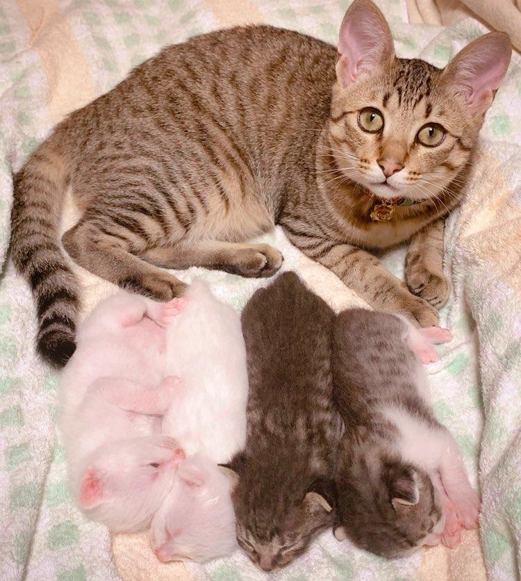 以前は並んだ4つの寿司🍣みたいだったけど、すっかり猫チャンに。 #今日の猫