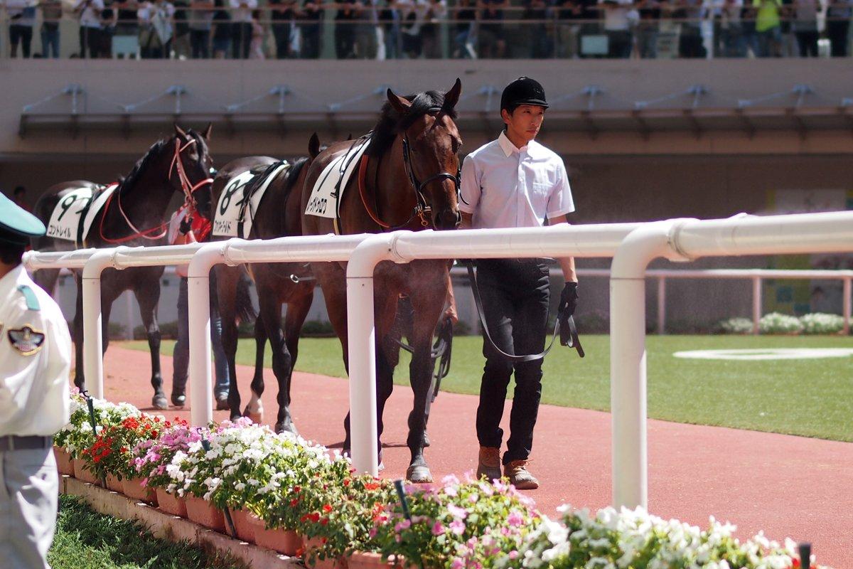 2019/09/15 5R 新馬戦 🐴レーヴドゥロワと川田騎手 キンカメの子だし、川田騎手だし、 2番人気だから絶対勝ち負けだと思ってたけど 最下位だったのね💦  今日すごい暑かったしやる気でなかったかな。 次回に期待してます🙃