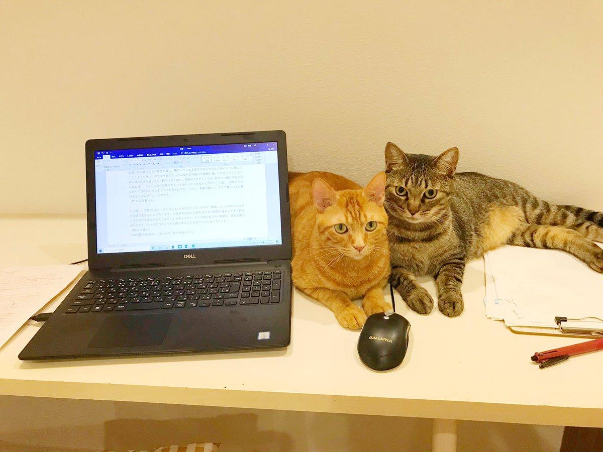 隣が気になりすぎて、仕事に集中できない。