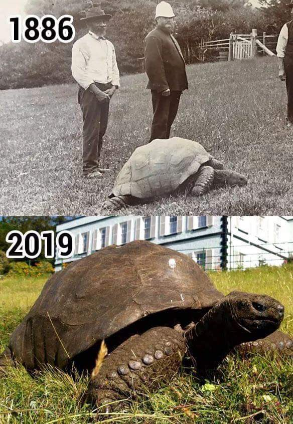 """The Planet Today: """"Jonathan is the oldest known living terrestrial animal in the world. He came to life in 1832 and is currently 187 years old. He has lived through WW1 and WW2, the Russian Revolution, seven monarchs on the British throne, and 39 US presidents."""" <br>http://pic.twitter.com/BQklZCmrR8"""