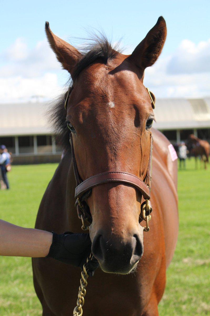 レーヴディソールの18(父キングカメハメハ)。母は阪神JF(GⅠ)、チューリップ賞(GⅢ)、デイリー杯2歳S(GⅡ)優勝、JRA賞最優秀2歳牝馬。  #社台秋ツアー2019