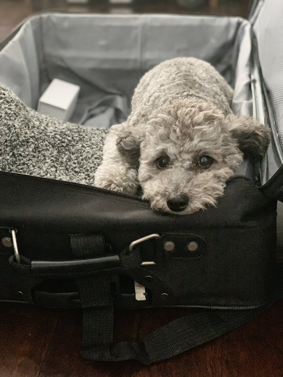 My dog thinks any open suitcase is his bed.