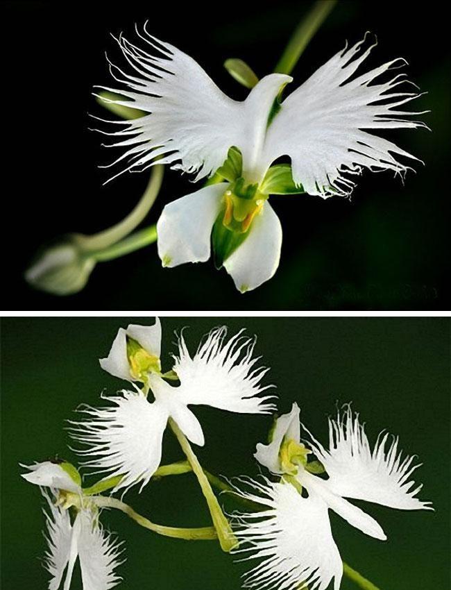 орхидея в виде птицы фото африканском интерьере используют