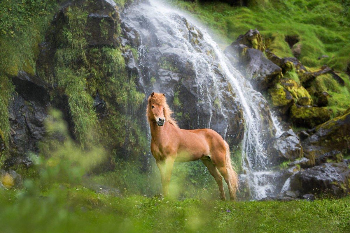 Büyüleyici Atlar