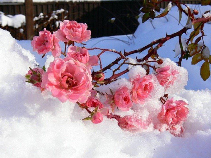 Зимний день рождения фото